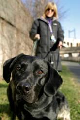 Philadelphia Dog Walker